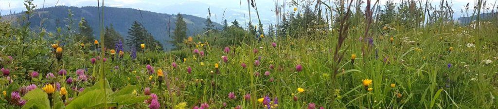 Łąka górska, pełna kolorowych kwiatów.
